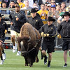"Jon Embree, back left, is running behind Ralphie again.<br /> For more photos of the game and a video of the alumni game, go to  <a href=""http://www.dailycamera.com"">http://www.dailycamera.com</a>.<br /> Cliff Grassmick/ April 9, 2011"