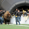 University of Colorado football players run out of the tunnel next to Ralphie and her handlers before the start of the football game against Texas Tech on Saturday, Oct. 23, at Folsom Field.<br /> Jeremy Papasso/ Camera