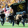 "Ralphie at Invesco Field.<br /> For more more photos of the game, go to  <a href=""http://www.dailycamera.com"">http://www.dailycamera.com</a><br /> Cliff Grassmick / September 4, 2010"
