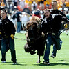 Ralphie's handlers lead Ralphie across the field prior to the start of the Colorado vs Colorado State football game in Denver, Colorado September 4, 2010.  CAMERA/Mark Leffingwell