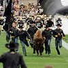 Ralphie handlers run across the field before the start of the game on Saturday, Sept. 18, during the football game against the University of Hawaii at Folsom Field.<br /> Jeremy Papasso/ The Camera