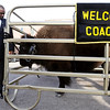 "Newly named CU football coach Jon Embree waits to have his photo taken with school mascot, Ralphie. The University of Colorado hosts a reception at the Blake Street Tavern in downtown Denver so Buff fans can welcome the new football coach Jon Embree. CU mascot ""Ralphie"" even made the trip from Boulder to Denver for the party. Kathryn Scott Osler, The Denver Post"
