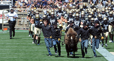 Colorado California NCAA Football642.JPG Here comes Ralphie! Coach Jon Embree is on the left. For more photos of the CU game, go to www.dailycamera.com. Cliff Grassmick / September 10, 2011