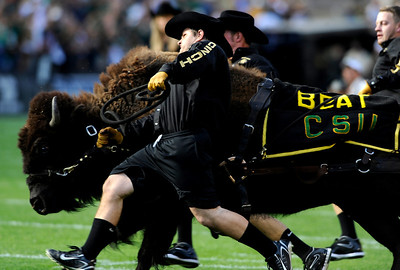 Ralphie handlers run in the buffalo to signal the start of the game at the annual Rocky Mountain Showdown in Folsom Field in Boulder, Colorado on Sunday, Sept. 6, 2009. KASIA BROUSSALIAN / THE CAMERA
