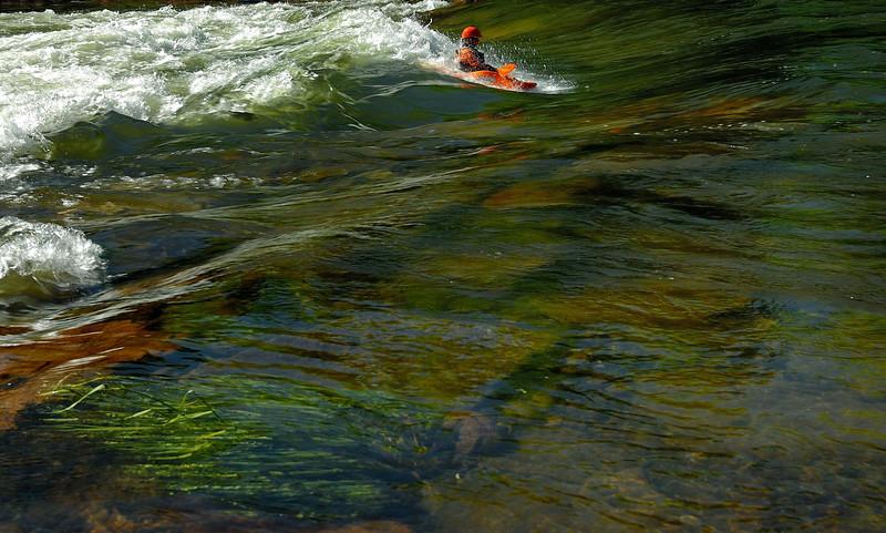 RiverWeeds