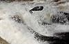Rapids on Gunnison