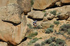 Alone in the rocks (Rage in the sage 2011 Gunnison )
