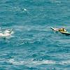 Molokai to Oahu Paddleboard Race 2009-149