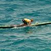 Molokai to Oahu Paddleboard Race 2009-154