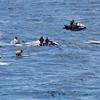 Quicksilver  Molokai to Oahu Paddleboard Race 2006s-14