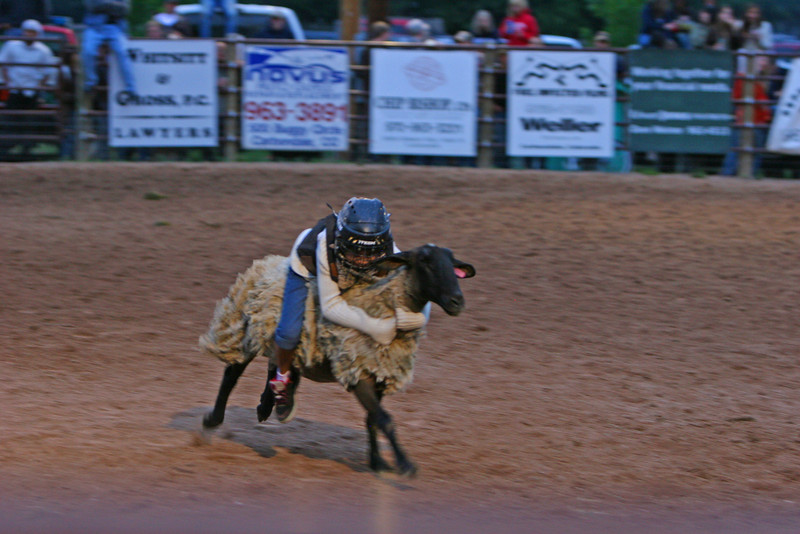 jackie Garcia holds on to win the mutton busting at the carbondale wildwest rodeo june 18