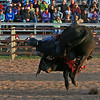 Bull rider hangs on as everything turns sideways