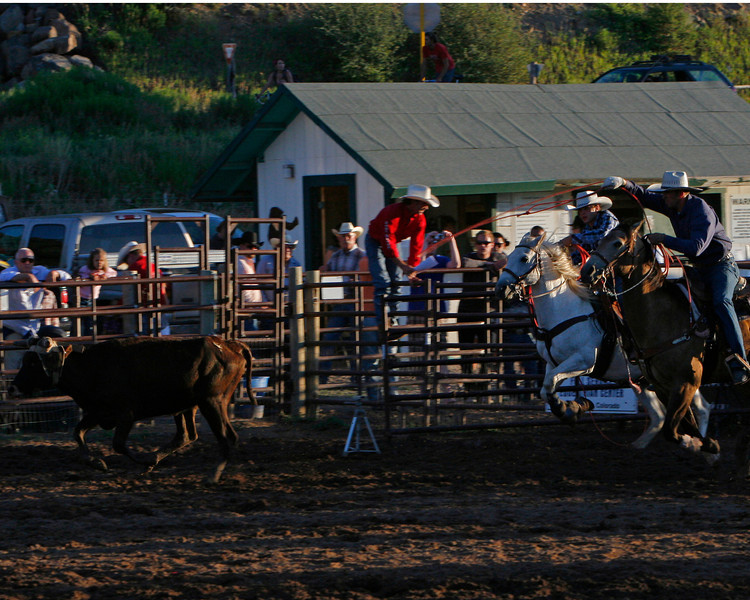 Two ropers charge after their calf