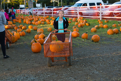 Premier Pumpkin Picking 2014-9