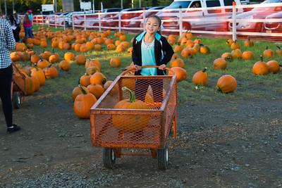 Premier Pumpkin Picking 2014-10