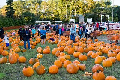 Premier Pumpkin Picking 2014-7