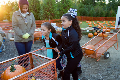 Premier Pumpkin Picking 2014-24