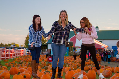 Premier Pumpkin Picking 2014-20