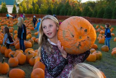 Premier Pumpkin Picking 2014-3