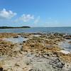Tidal basin at low tide