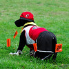 <b>XC Hammer</b>, Clackamas High XC mascot, watches the races at Rooster Rock State Park