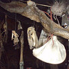 Local witchdoctor trinkets from inside his clinic in the township.