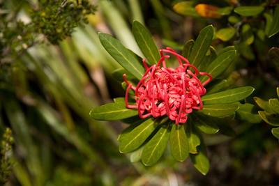 Flower. It's red.