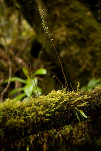 A mossy plant.