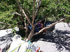 Hannah roosting in the belay bush.