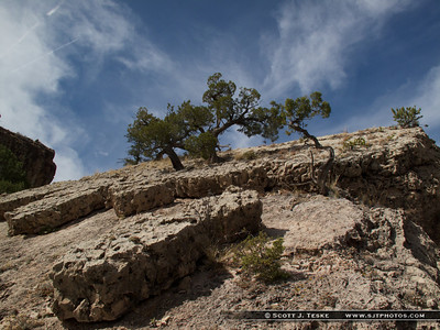 cool trees atop massive boulder!