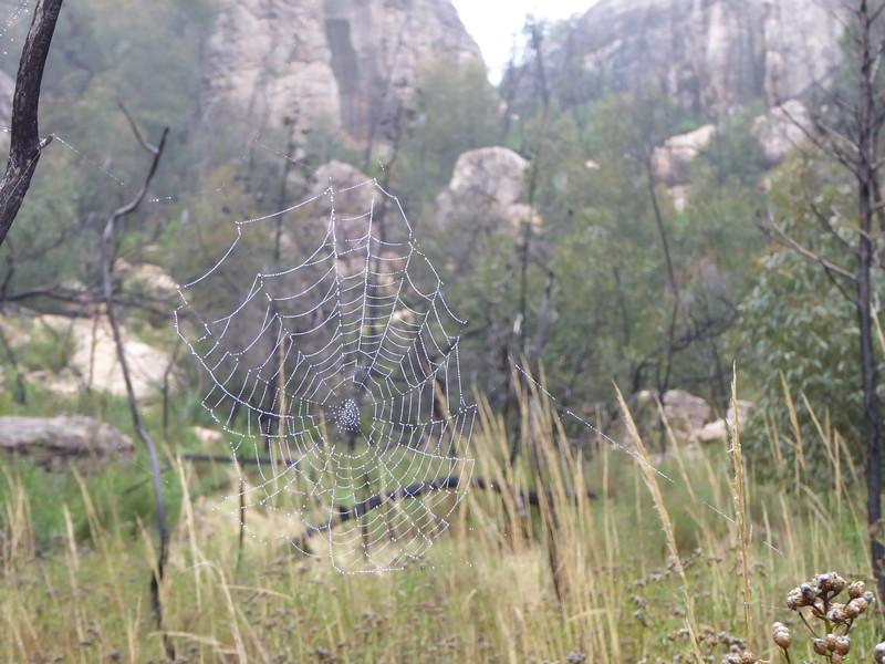 Summerday Valley spiders.