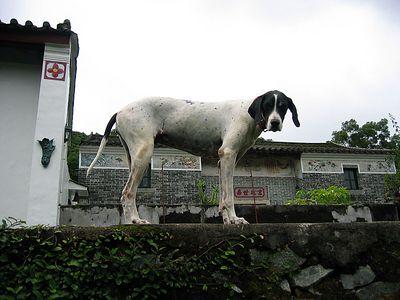 30 Jul 2005 猴子戲水猴塘溪