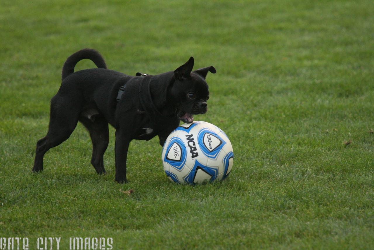 IMG4_33419 Little black dog and soccer ball