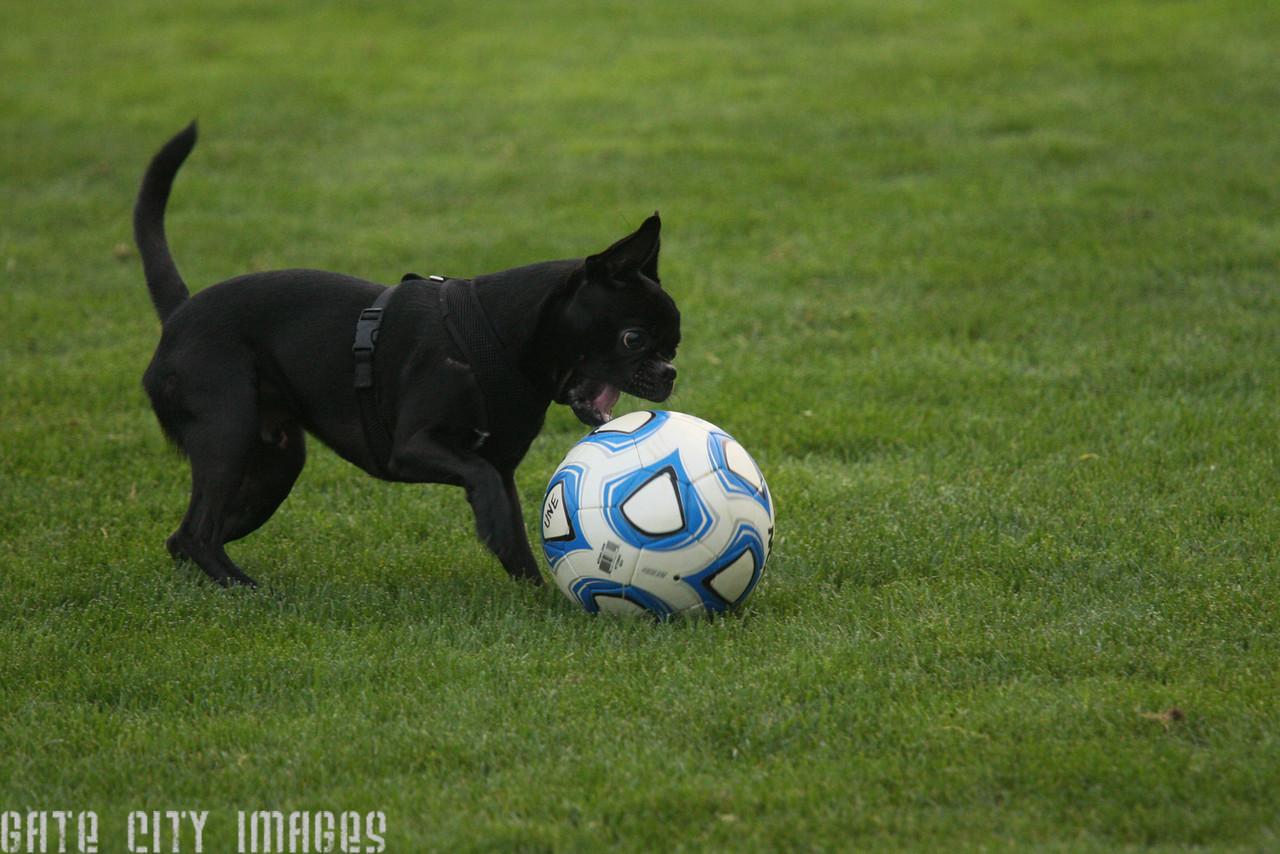 IMG4_33418 Little black dog and soccer ball