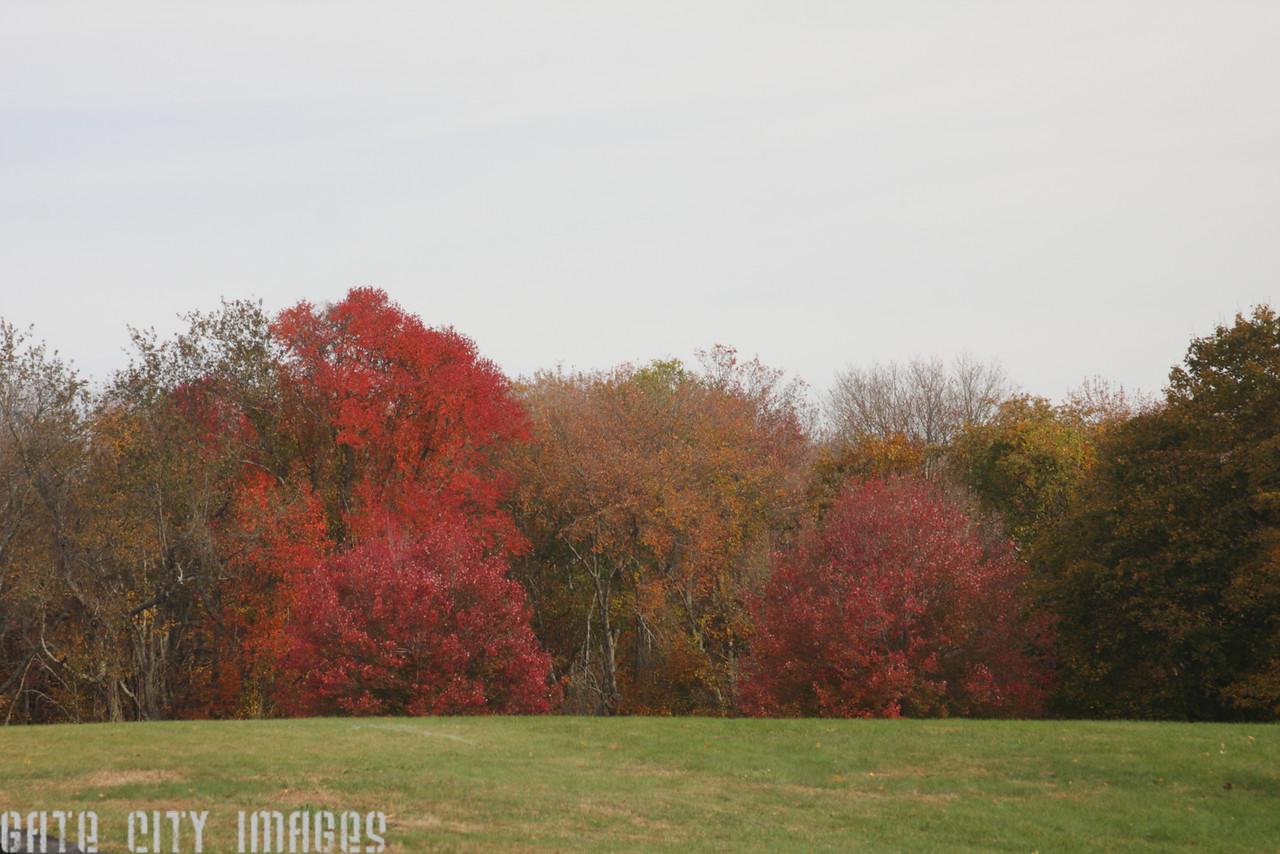 IMG_1980 Foliage