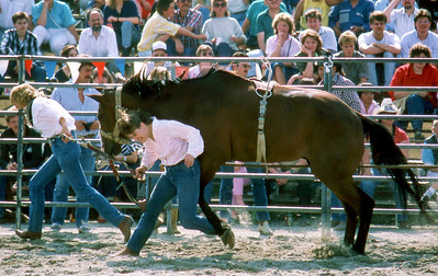 #1 of 4.  Cowgirls trying to saddle a wild horse. The horse takes out the first young lady.
