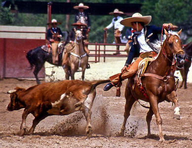 "Charro (Mexican Rodeo). A Vaquero in and event called ""Tailln' the Steer"". The rider chases the steer grabs the tail, spins and throws it to the ground. The event is similar to ""Bulldogging"" in American rodeos and is scored by timing."