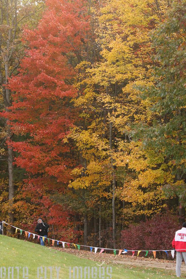 IMG4_15166 trees NHSS XC State Meet