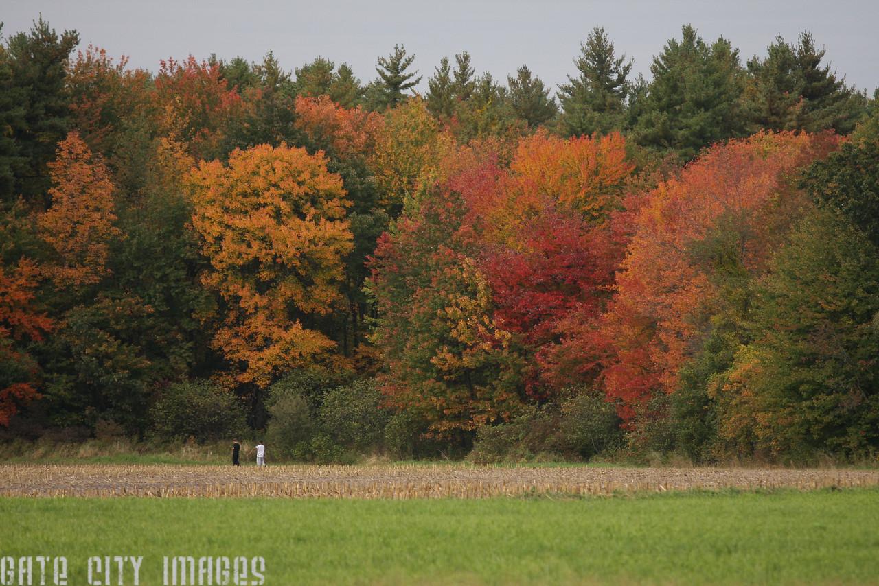 IMG4_40758 fall colors