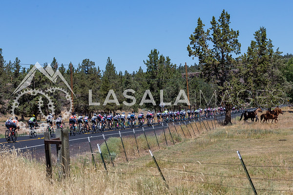 The peloton rides by horses during stage 1 of the women's road race at the 2016 Cascade Cycling Classic on July 20, in Bend, USA. Photo: Matthew Lasala/Lasala Images