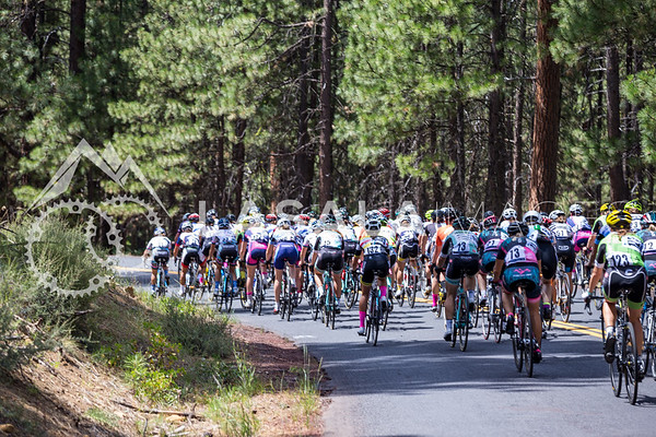 The peloton starts to climb towards MacKenzie Pass during stage 1 of the women's road race at the 2016 Cascade Cycling Classic on July 20, in Bend, USA. Photo: Matthew Lasala/Lasala Images