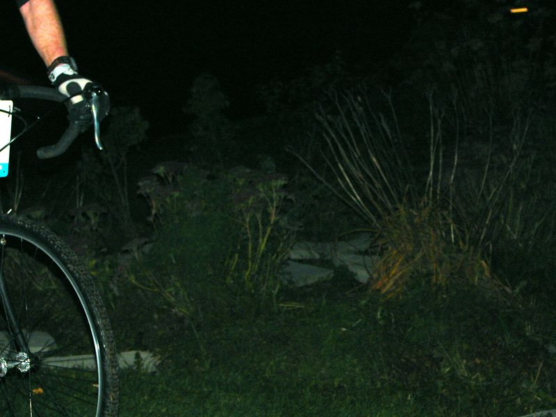 Another example of a rider ruining my nighttime plant photography. :-)