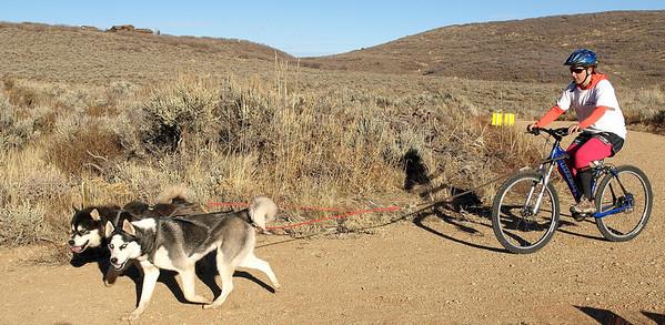 DRYLAND DOG  RACE