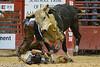 20120908_Davie Bull Riding-3