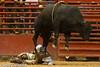 20120908_Davie Bull Riding-17