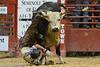 20120908_Davie Bull Riding-2