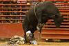 20120908_Davie Bull Riding-16