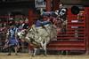 20120623_Davie Pro Rodeo-10