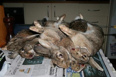 Dead Bunnies by Ben