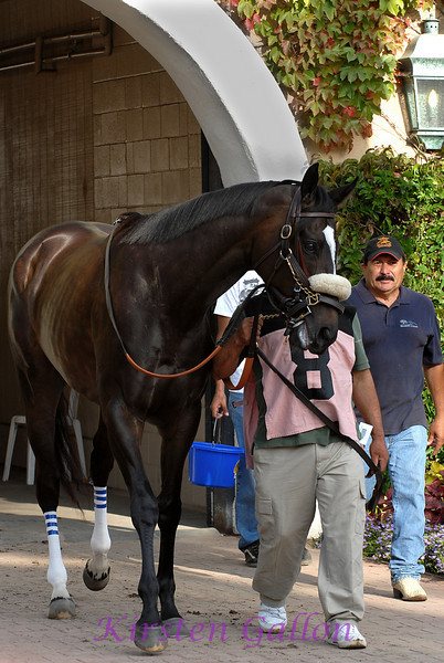 Zenyatta, one of the main attractions of the day.